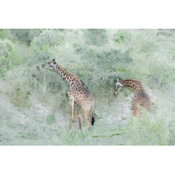 Girafes abstraites © Lionel Maye