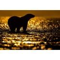 L'or du soir © Lionel Maye