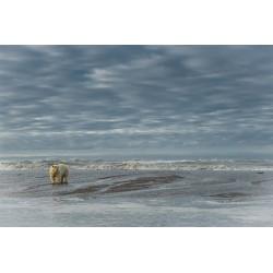 Big Mama devant l'océan arctique