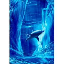 Requin - Personnalité n°6